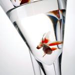 fot_krzysztof_stos_glass_023